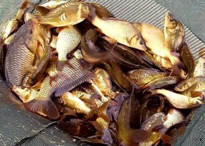 Mixed bag of carp